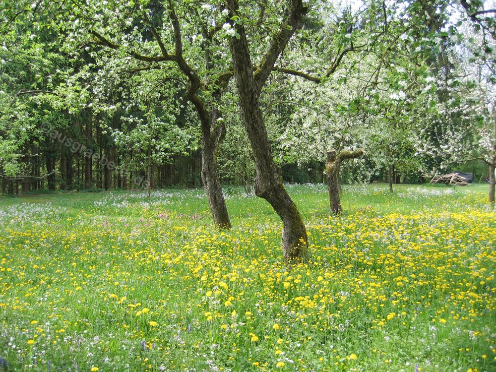 Flechten, Färben, Schnitzen: Blumenwiese